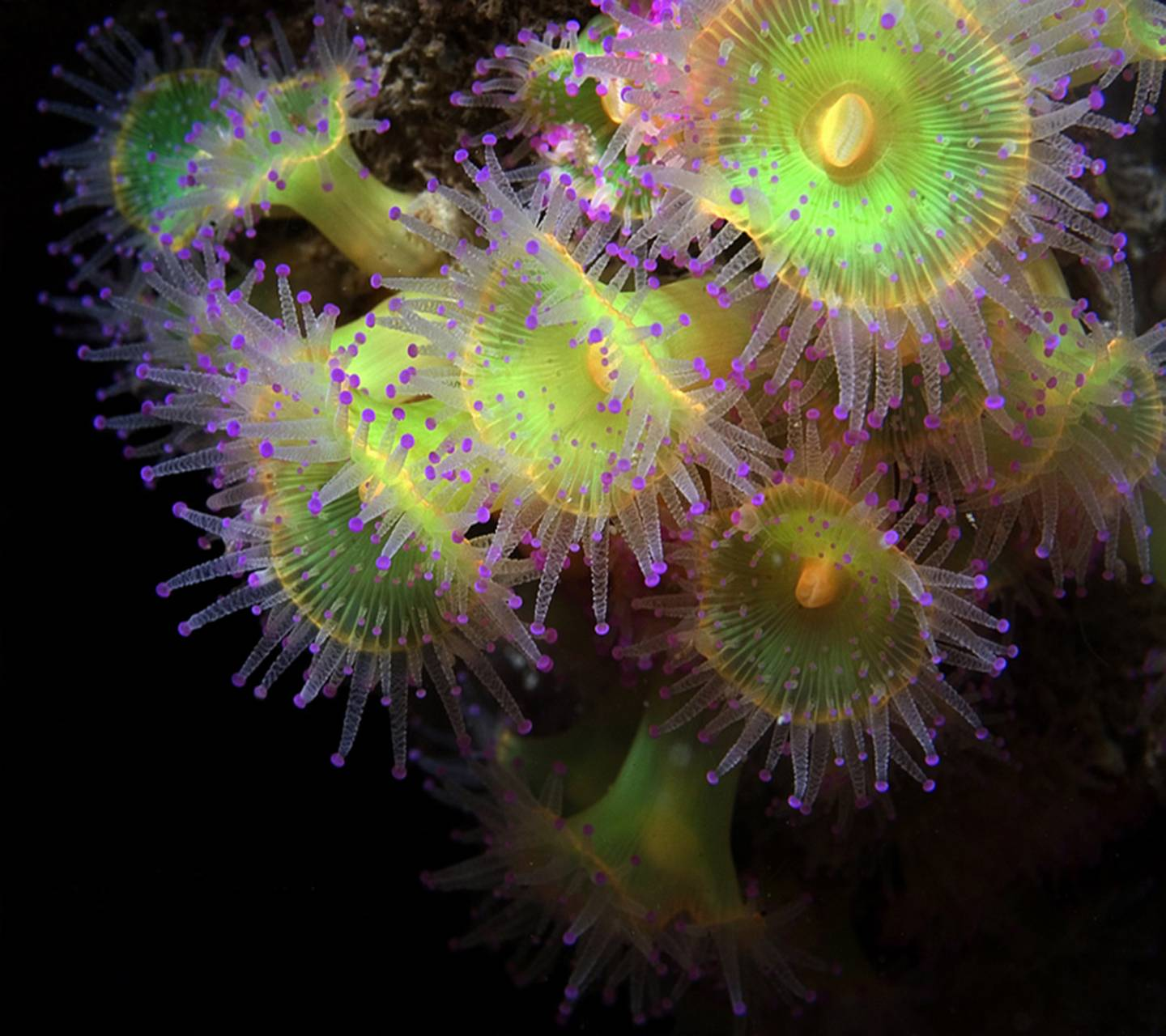 Beautiful Coral Hd