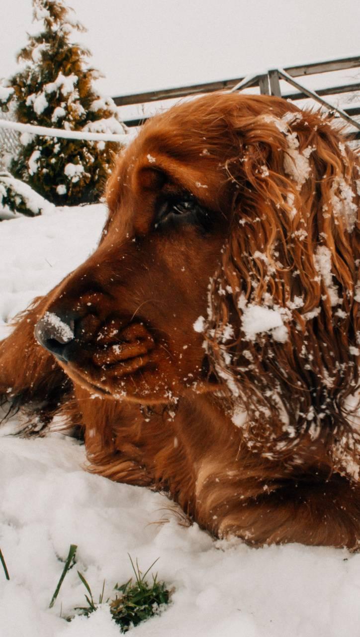pet portrait snow t