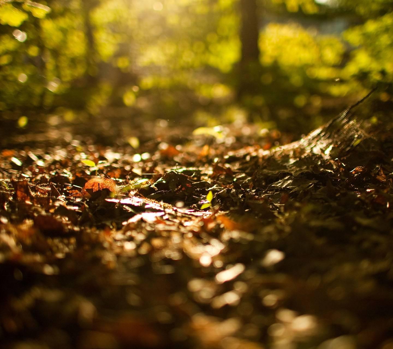 Autumn Begin