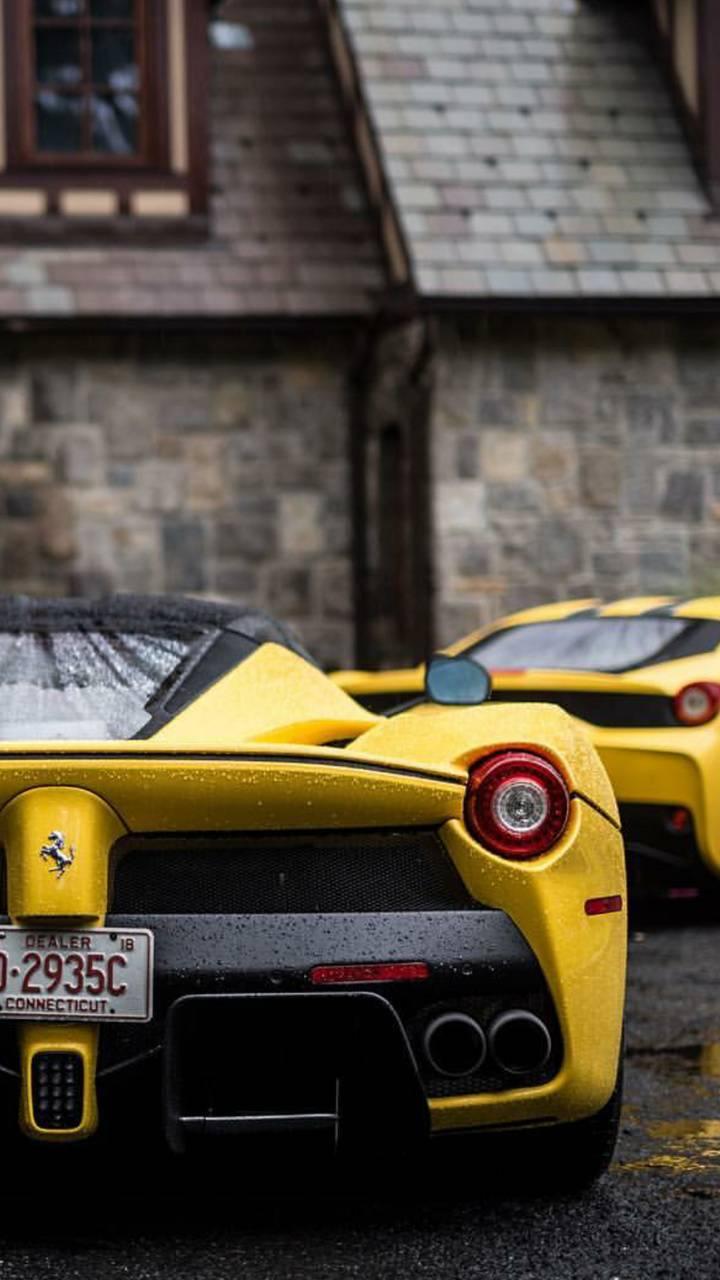 Two Yellow Stallions