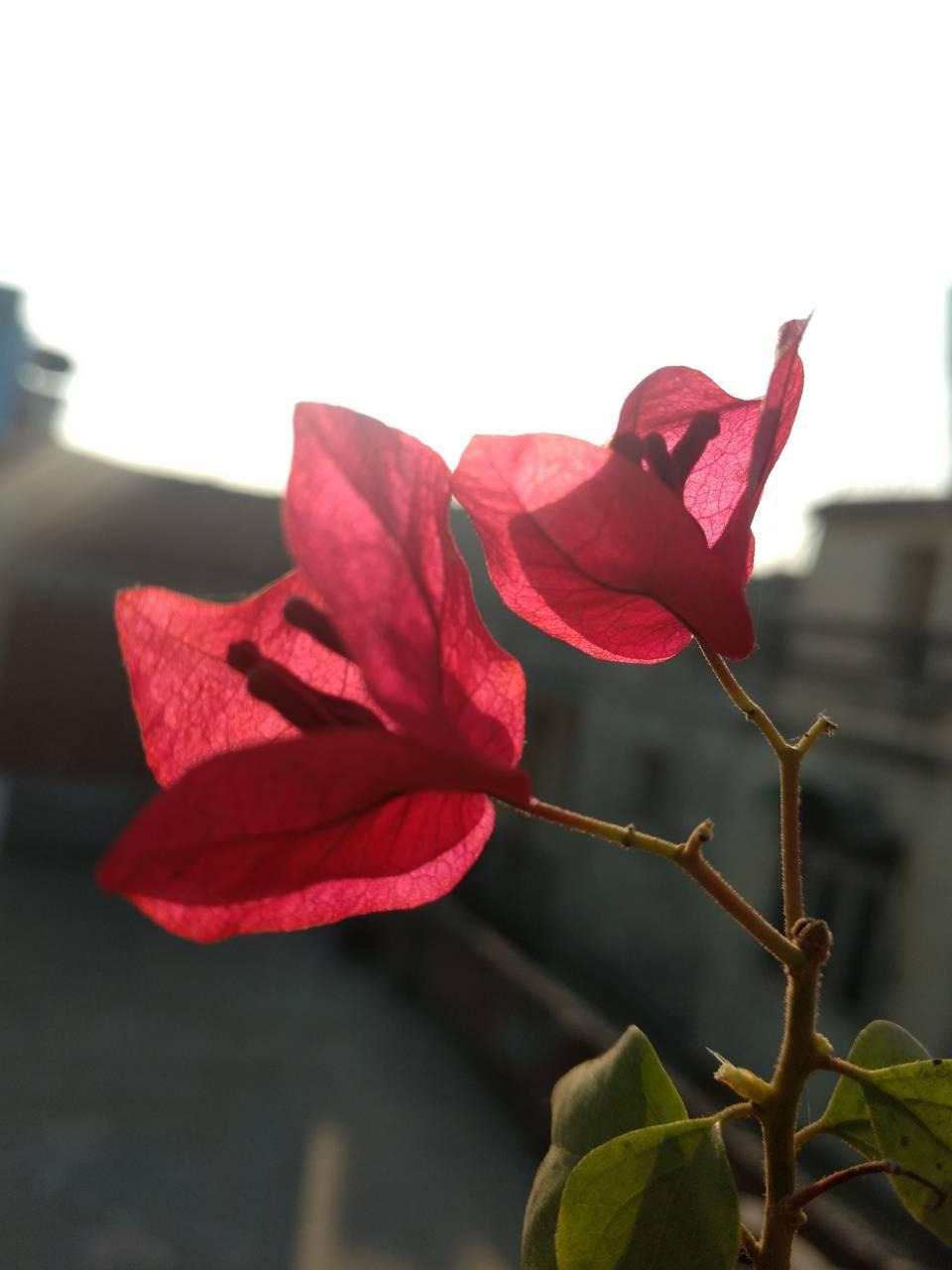 Flower down