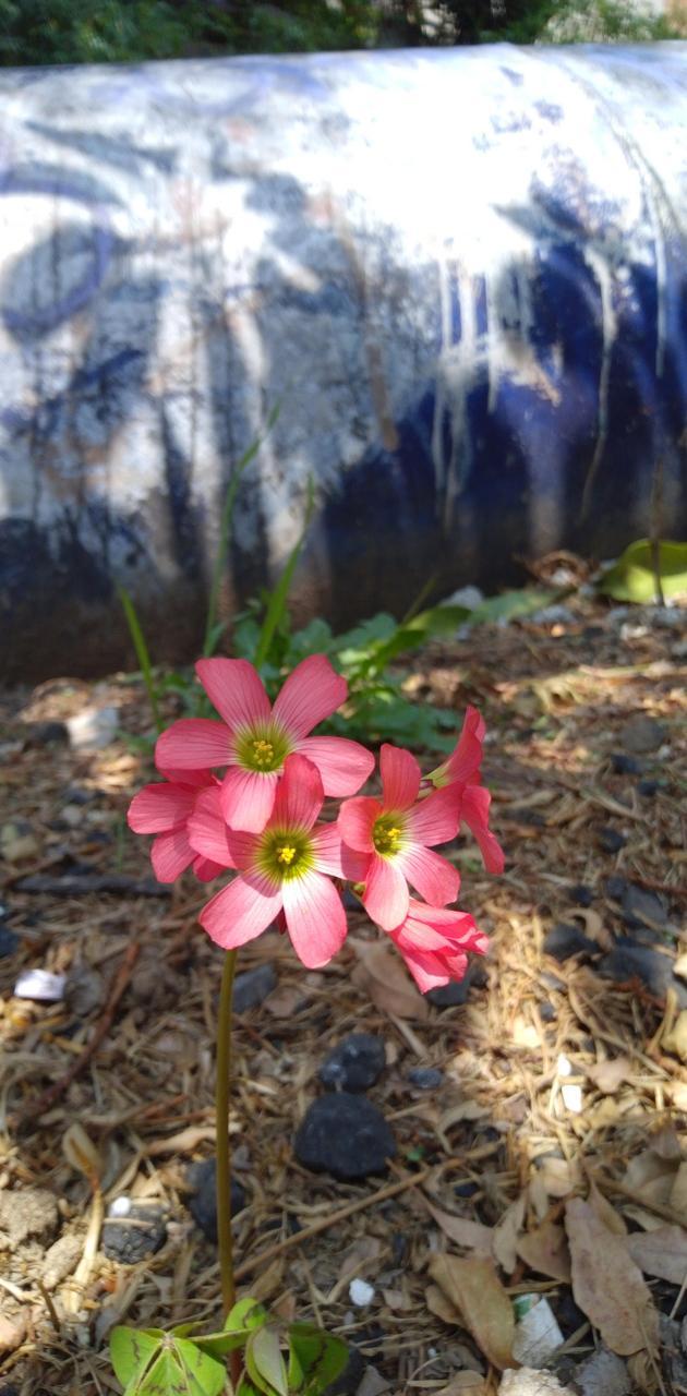 Pretty flor