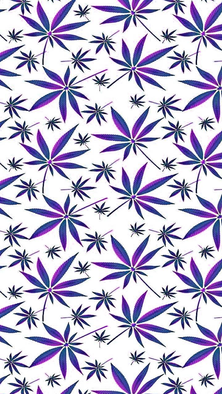 Panama Purple