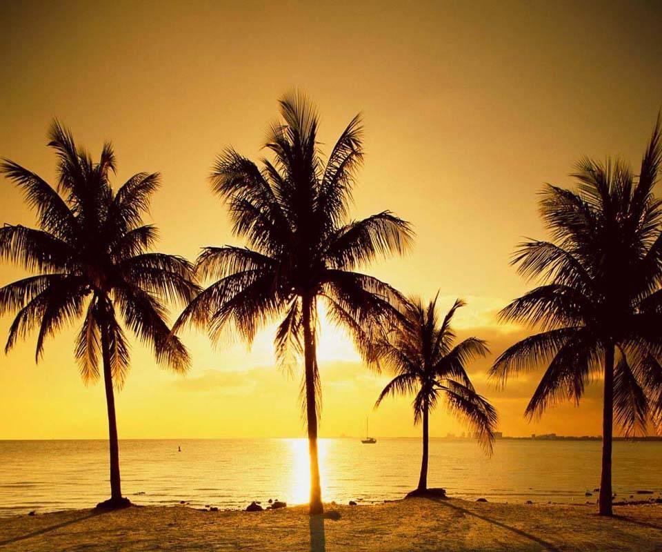 Sunset Palm Tree