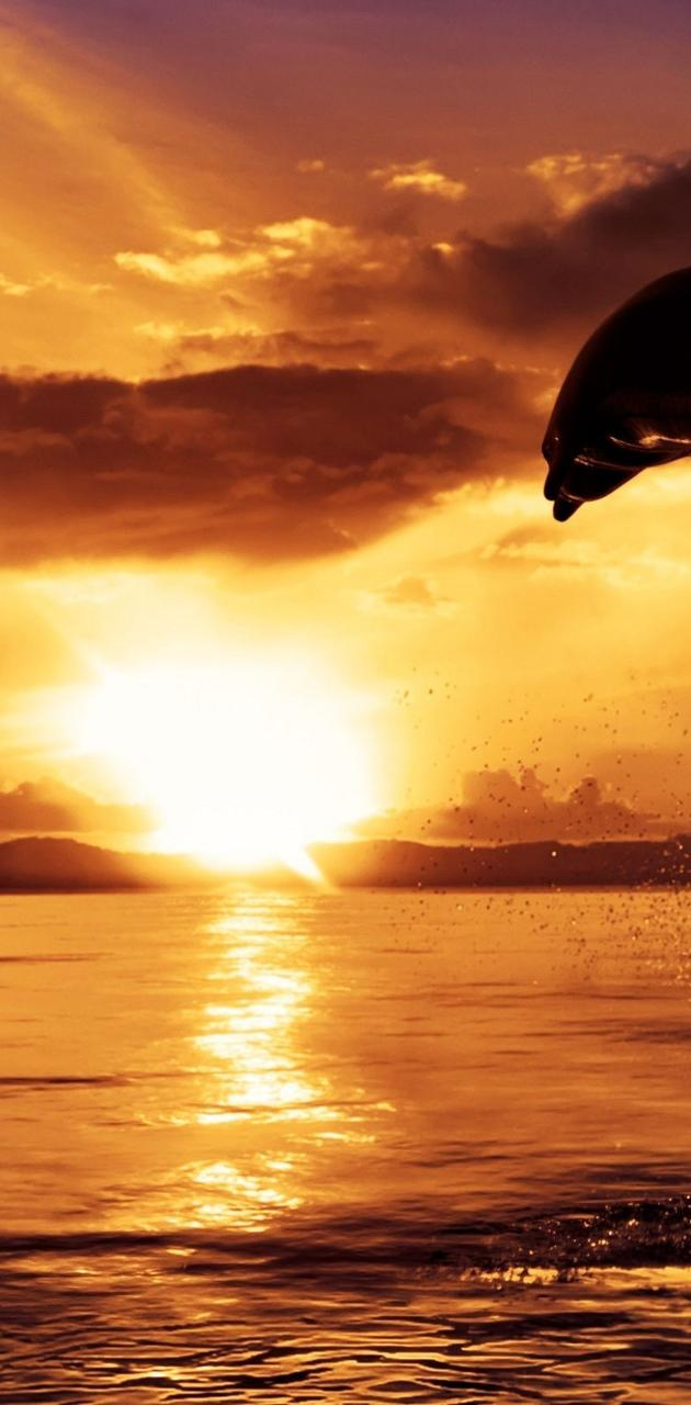 Dolphin In Sunset