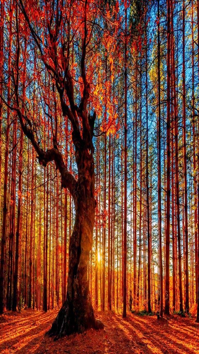 Forest tree Autumn