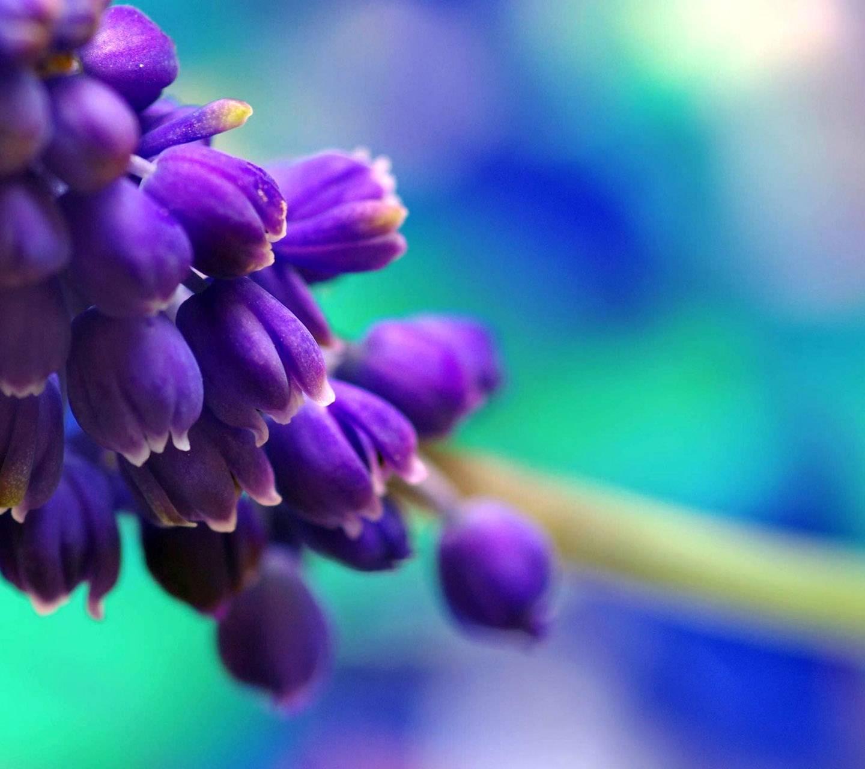 Blossome Hd