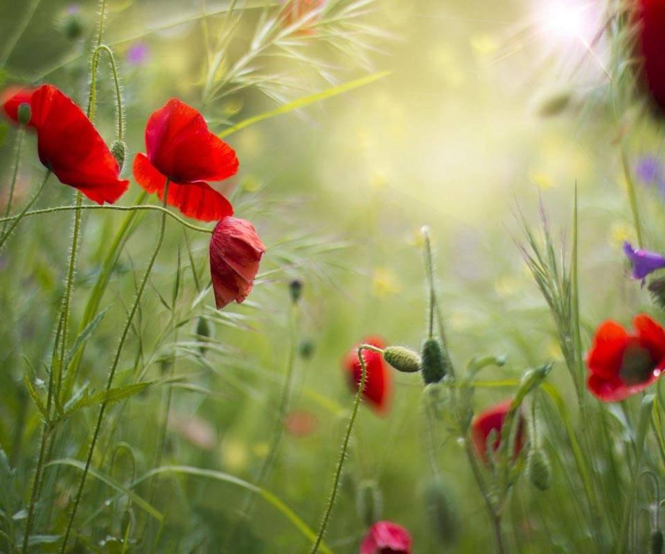Grass Field Flowers