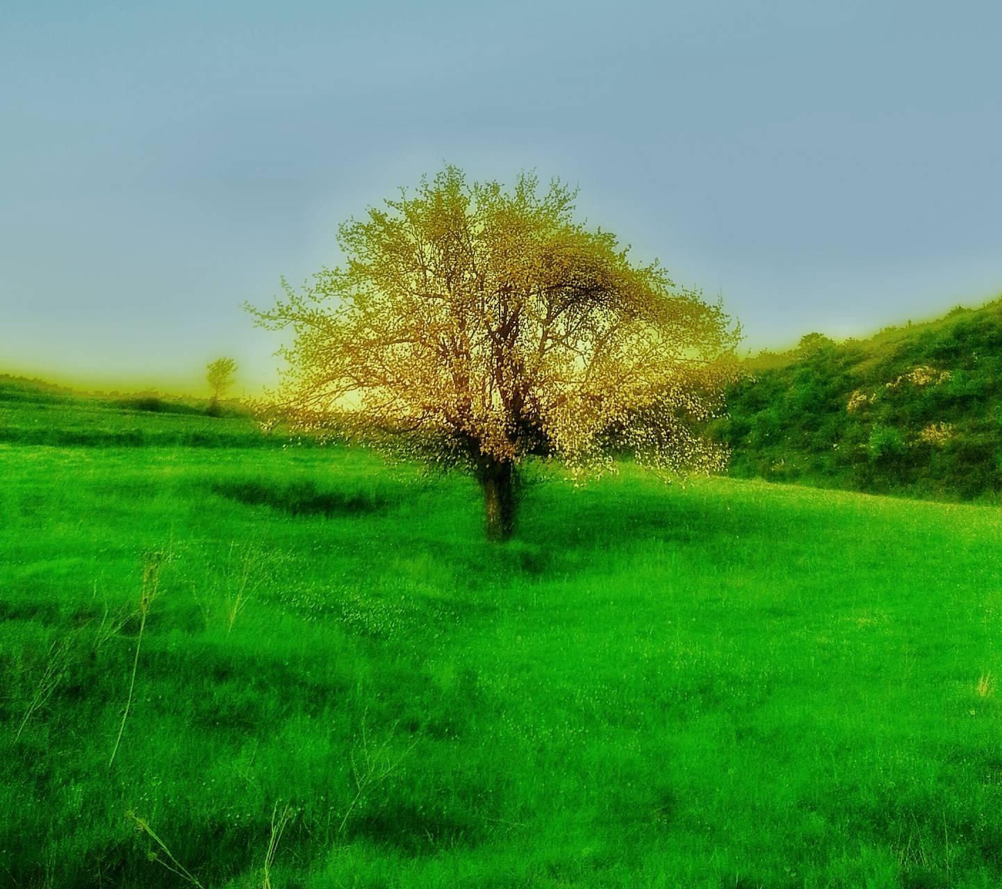 Lone golden tree