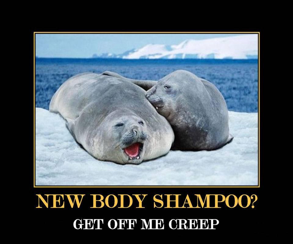 New Body Shampoo