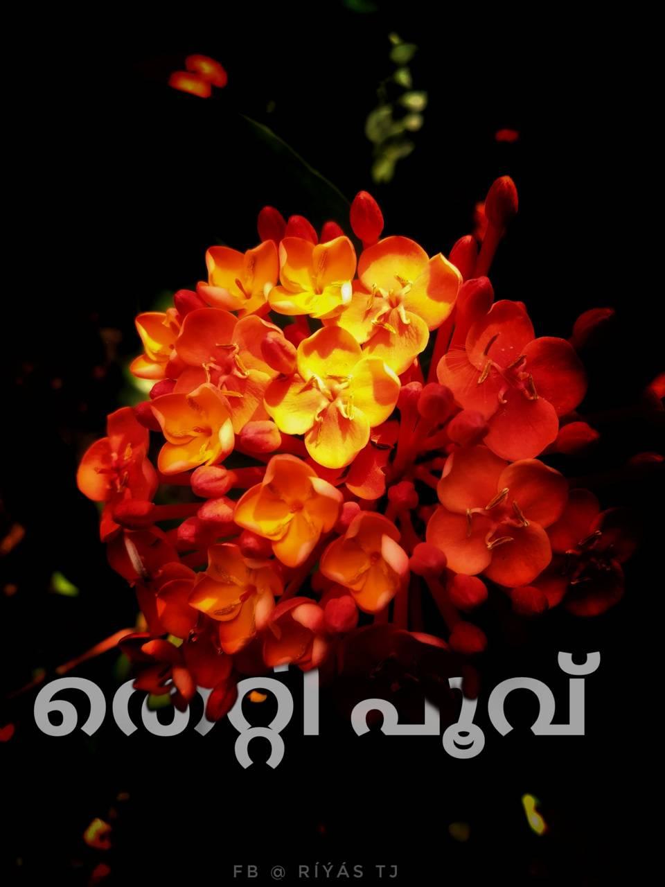 Riyastjphotography