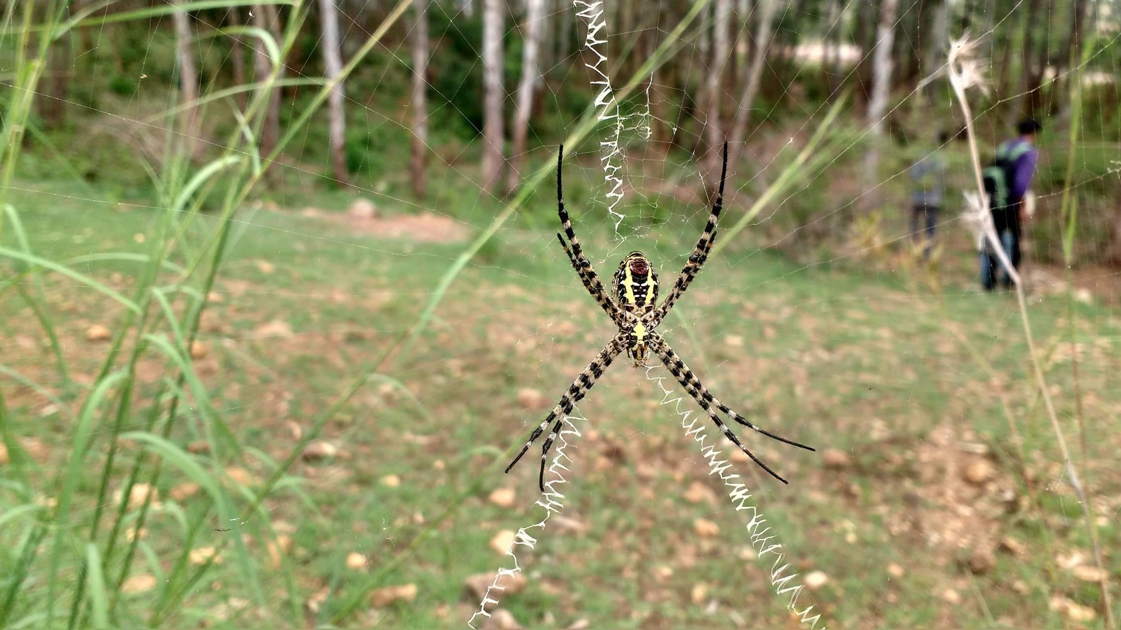 Spider -web