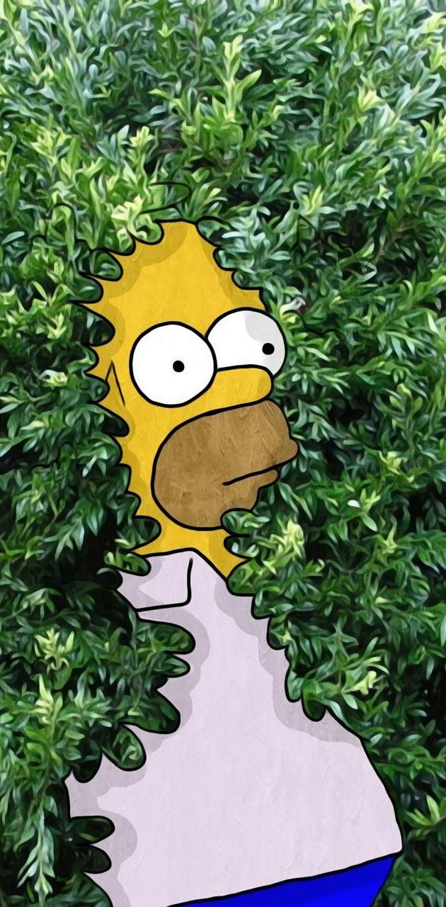 Homer plant