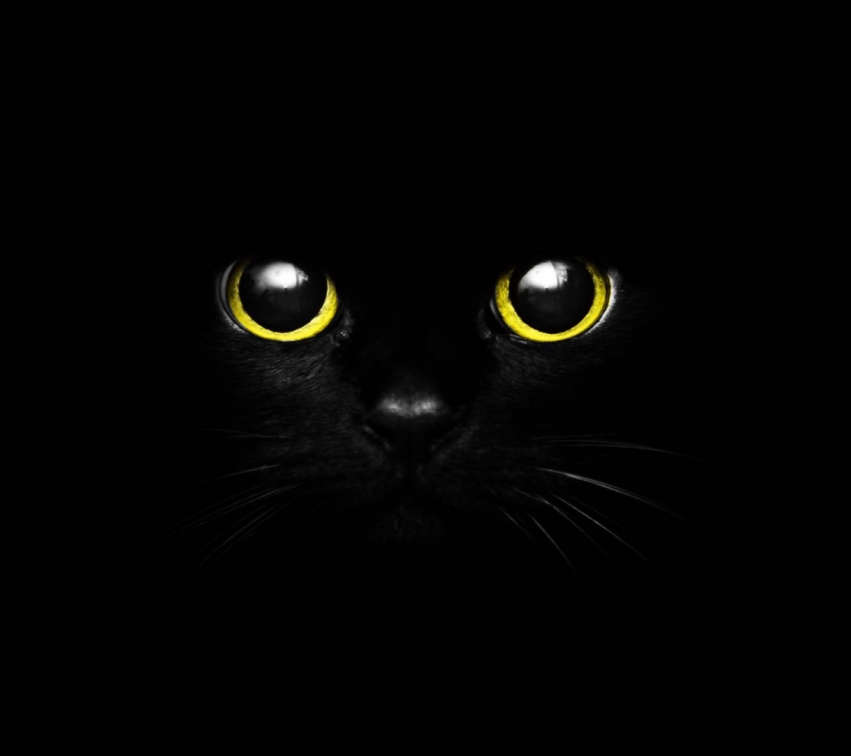 Cute Black Cat Eye Wallpaper By GaTiTOTonTo