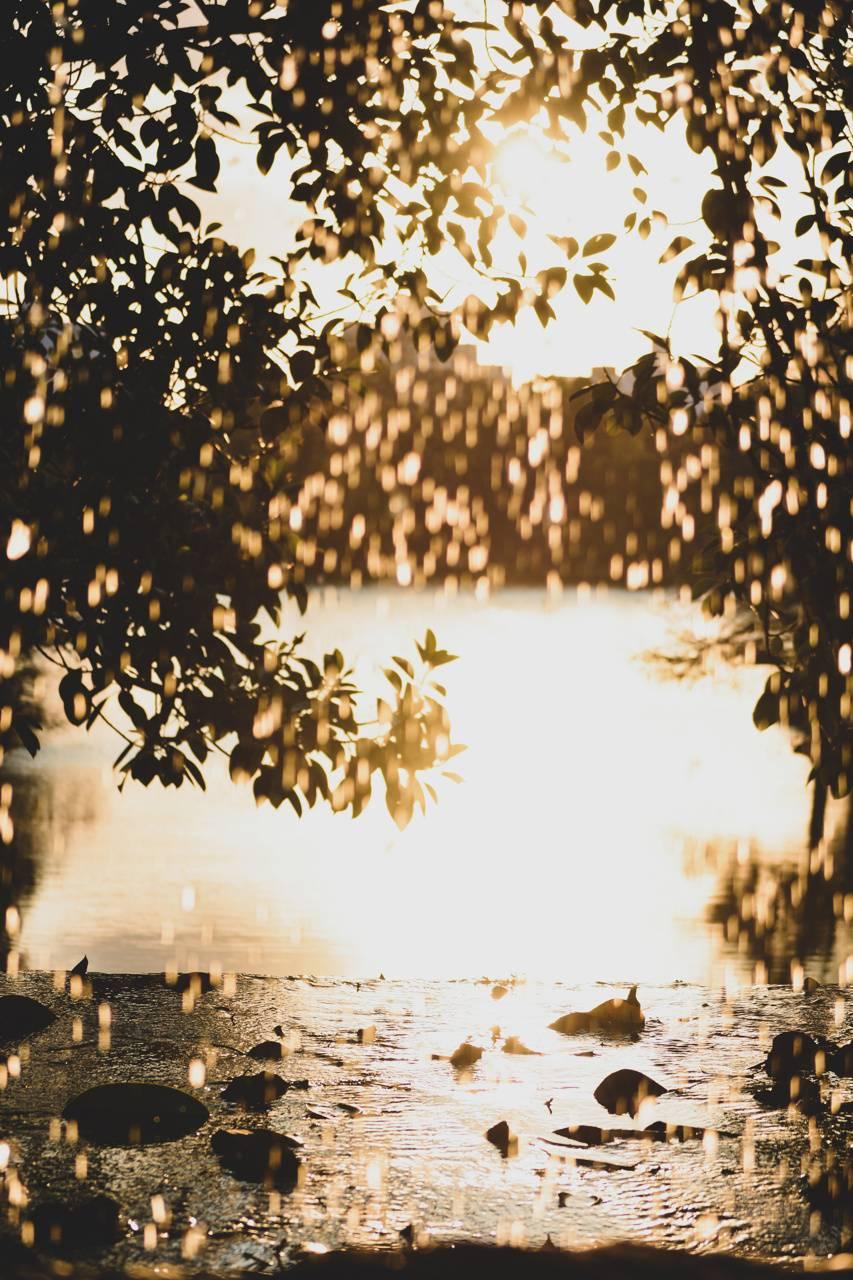 Lluvia dorada