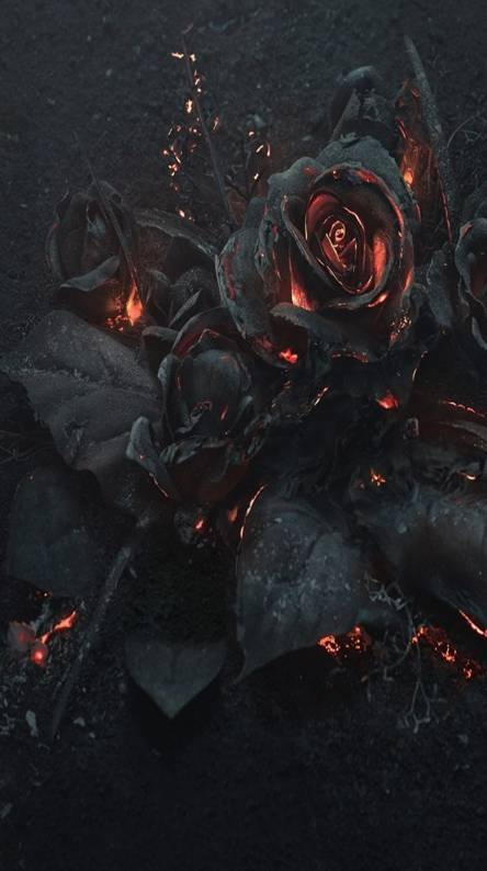 Fire Roses