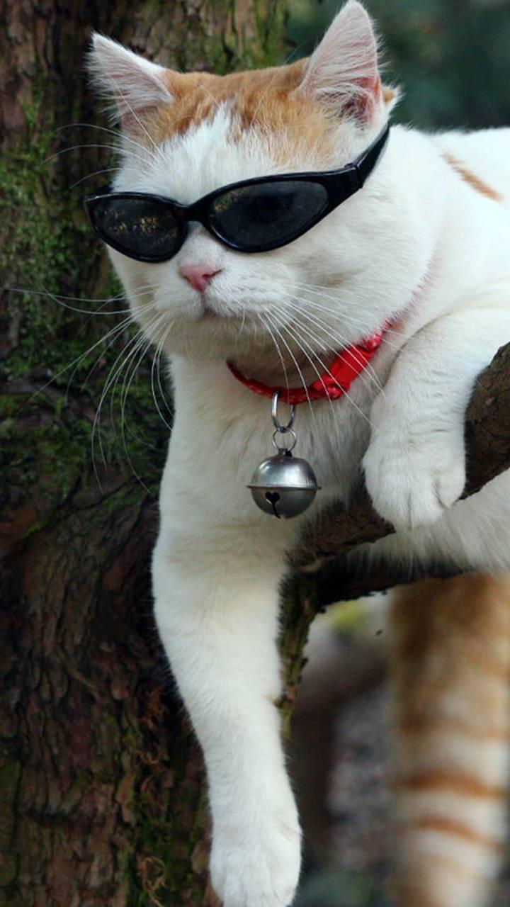 Cat Climbed