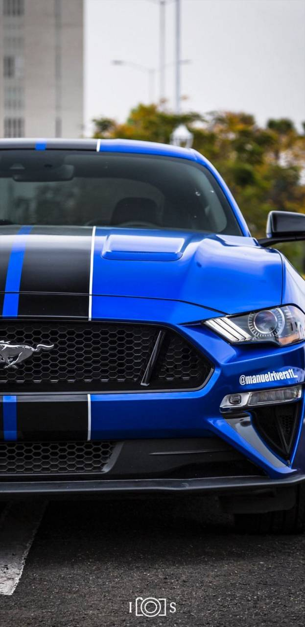 Mustang MR11