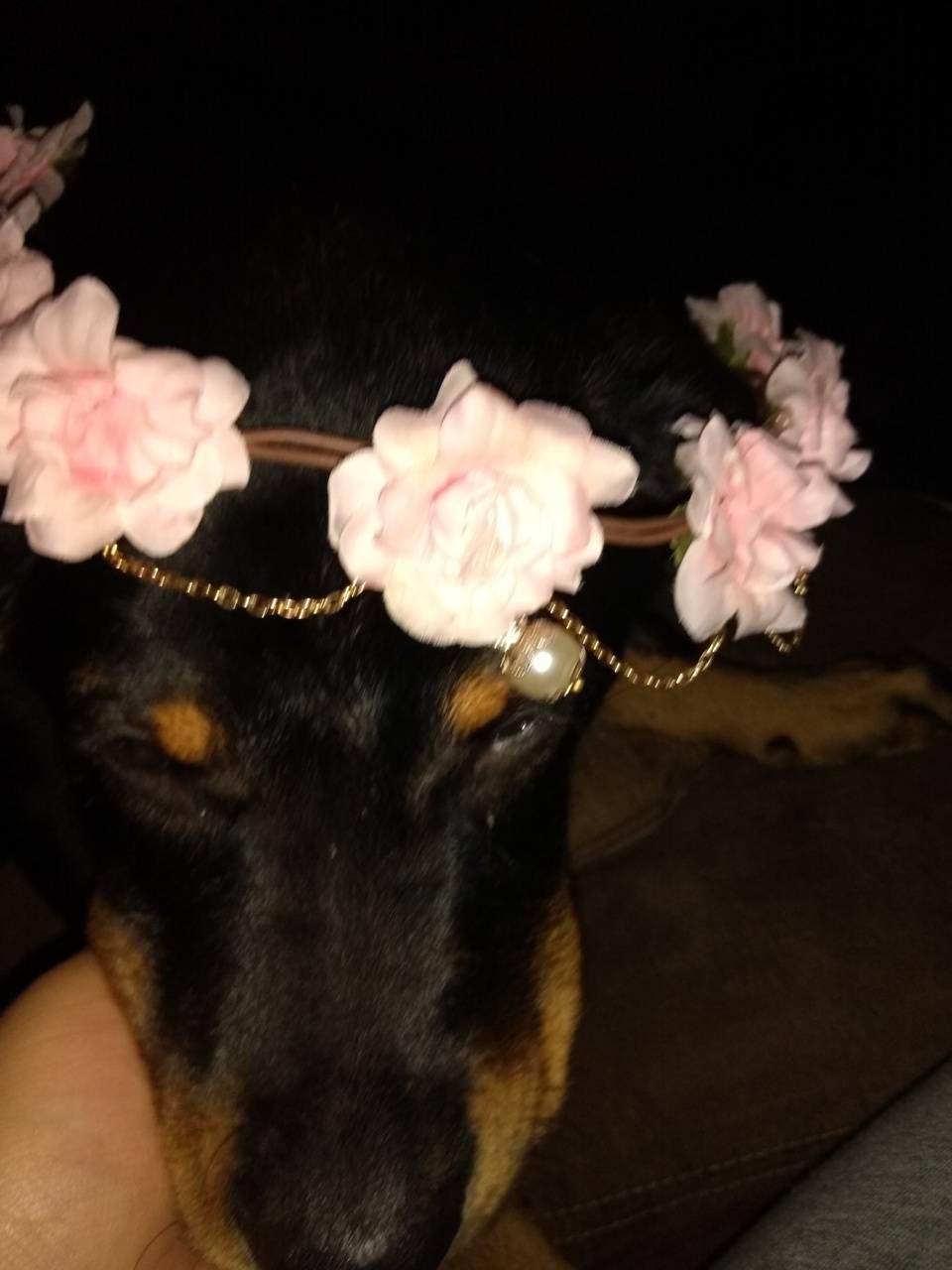 Headband boi