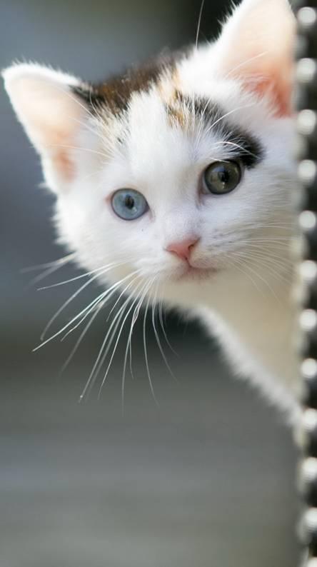 Kedi - Cat - Animal