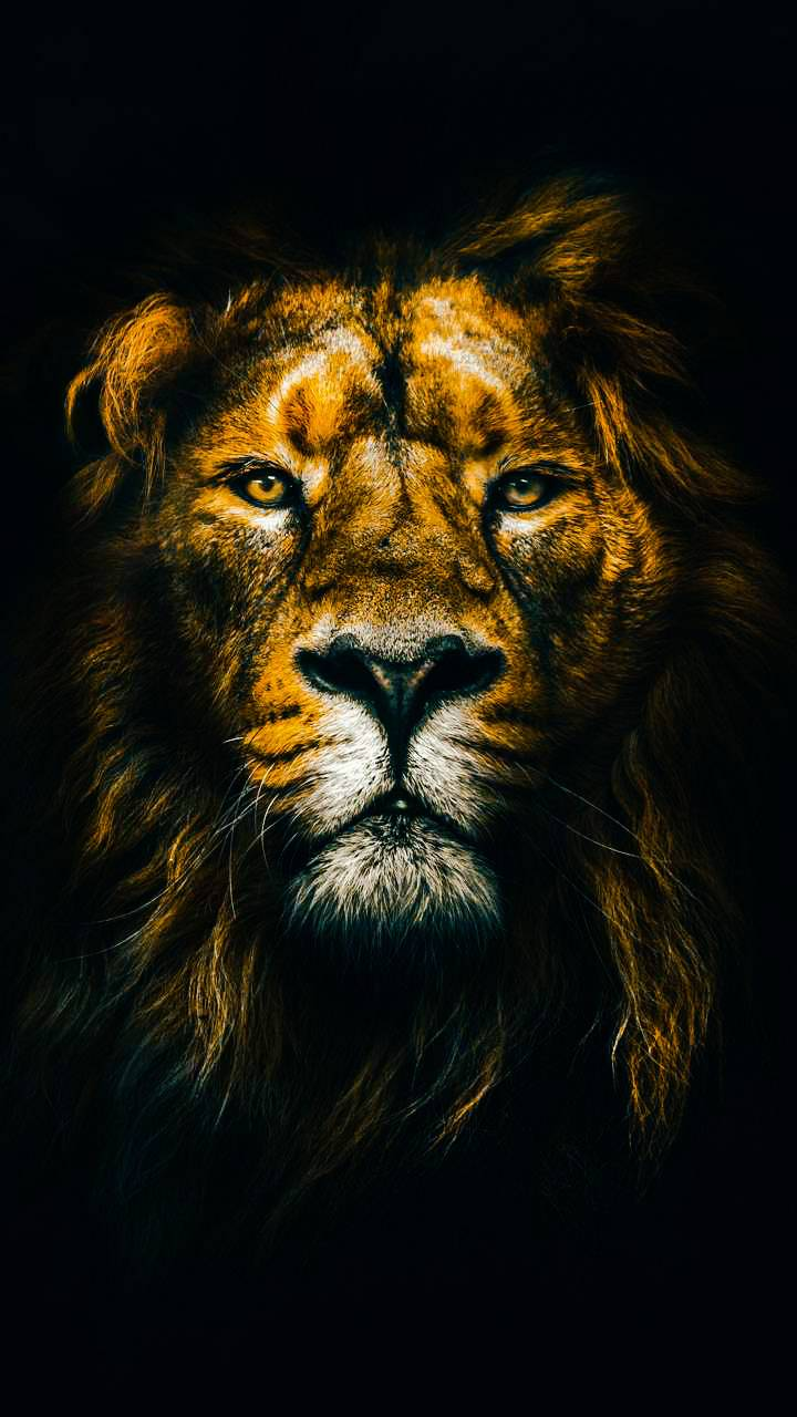 Yellow Lion Head Wallpaper By Wildwolf0524 E5 Free On Zedge