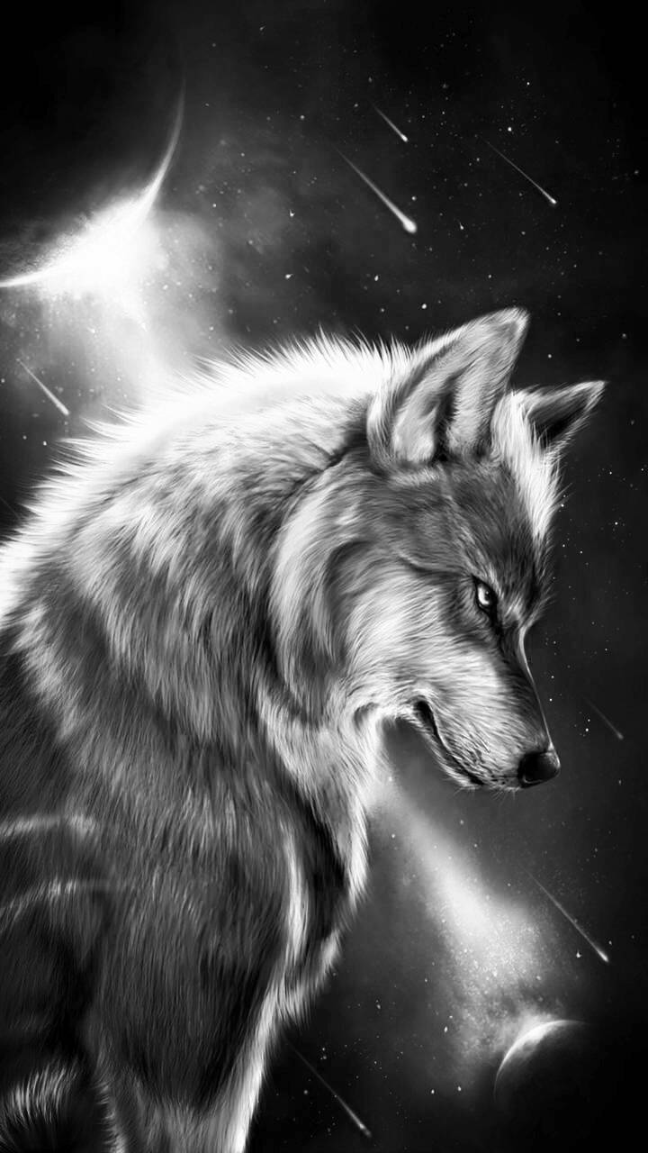 White Wolf Wallpaper By Rxn2016 A1 Free On Zedge