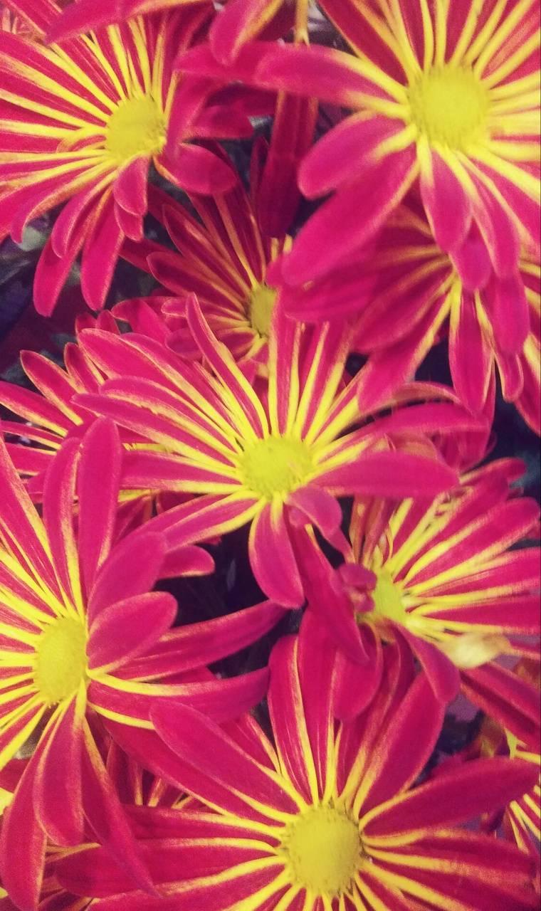 Florals de fuego