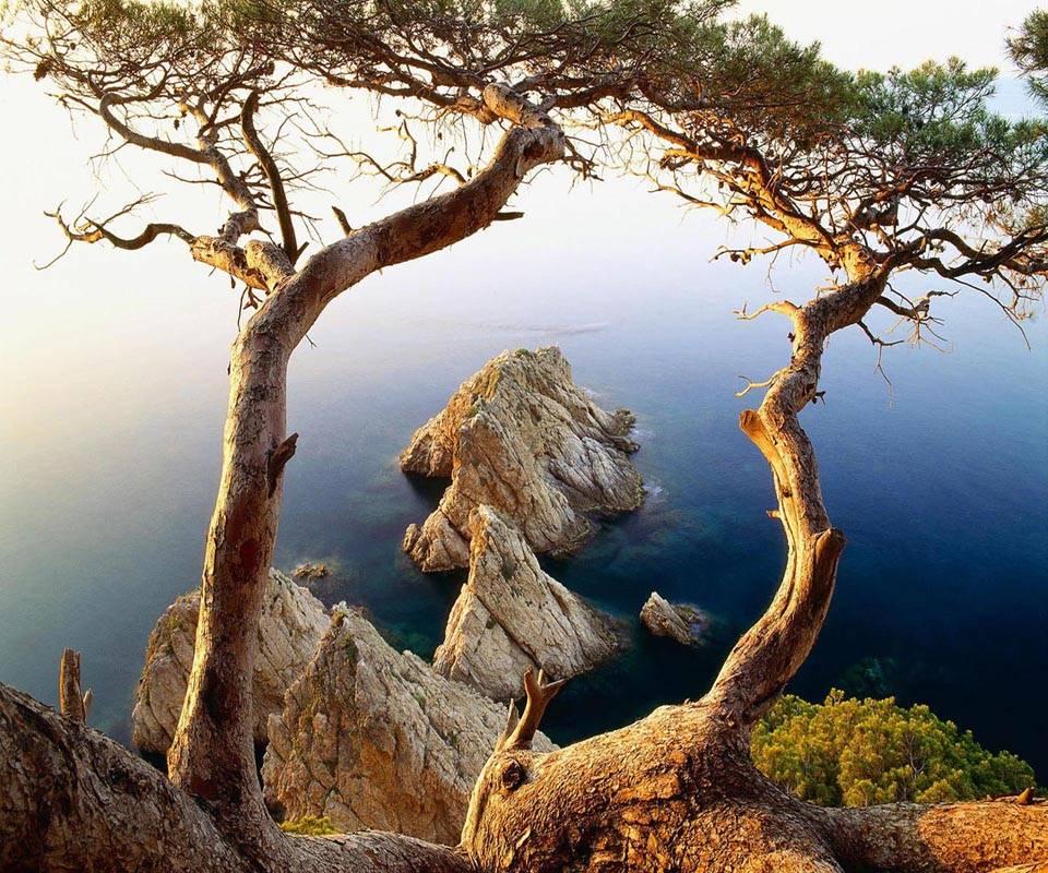 Tree rocks coast
