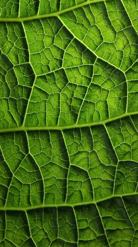 Texture Foliage