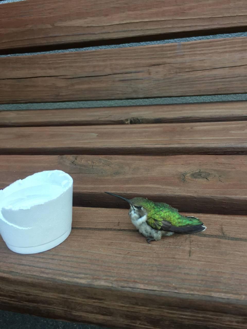 SweetLilHummingbird