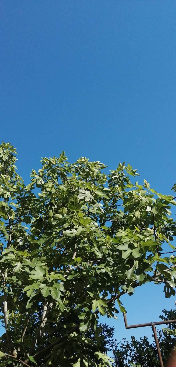 Tree Wallper 2