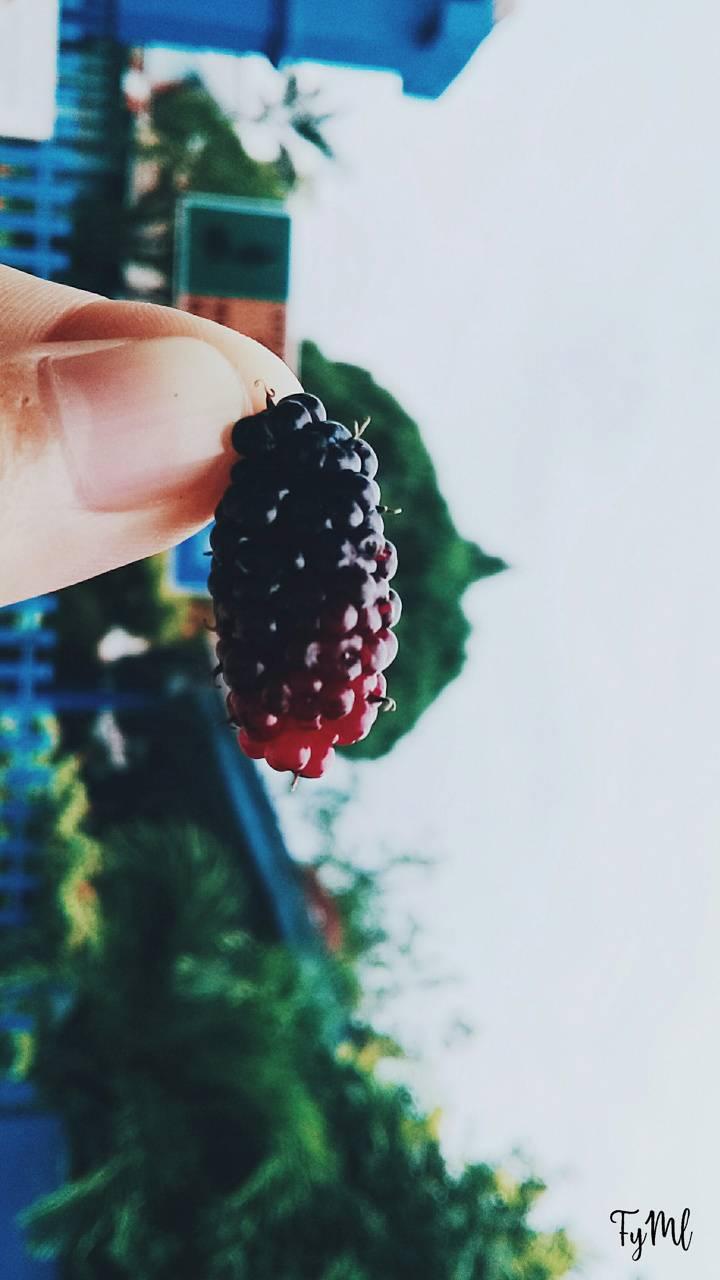 Black Mulberry