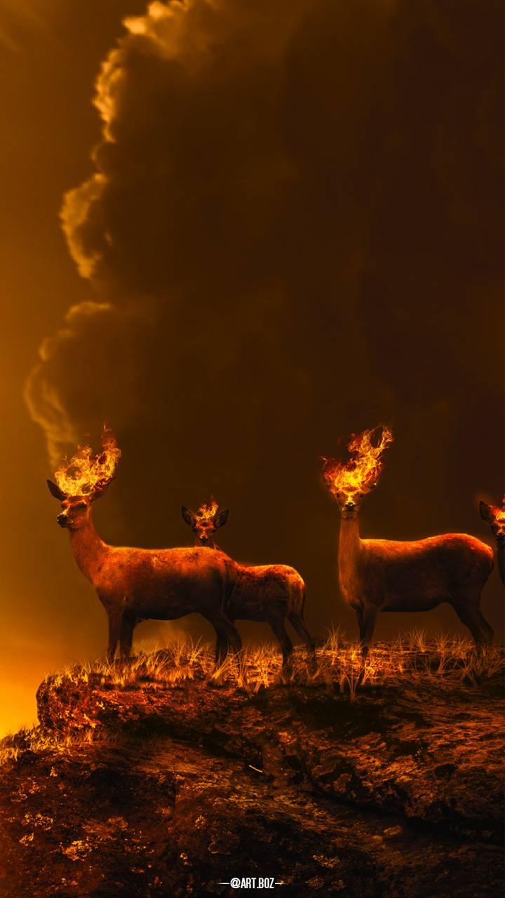 Fire Deers