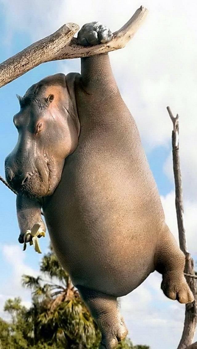 Hippo Monkey