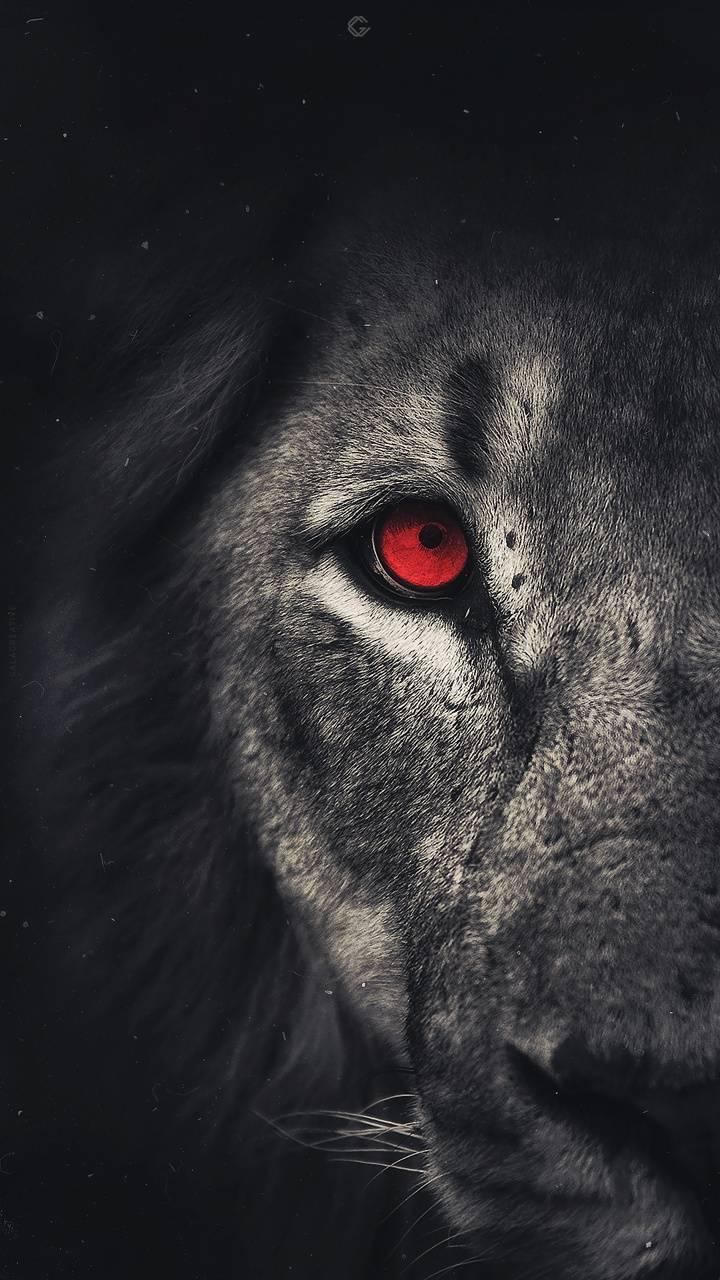 Galatasaray Lion