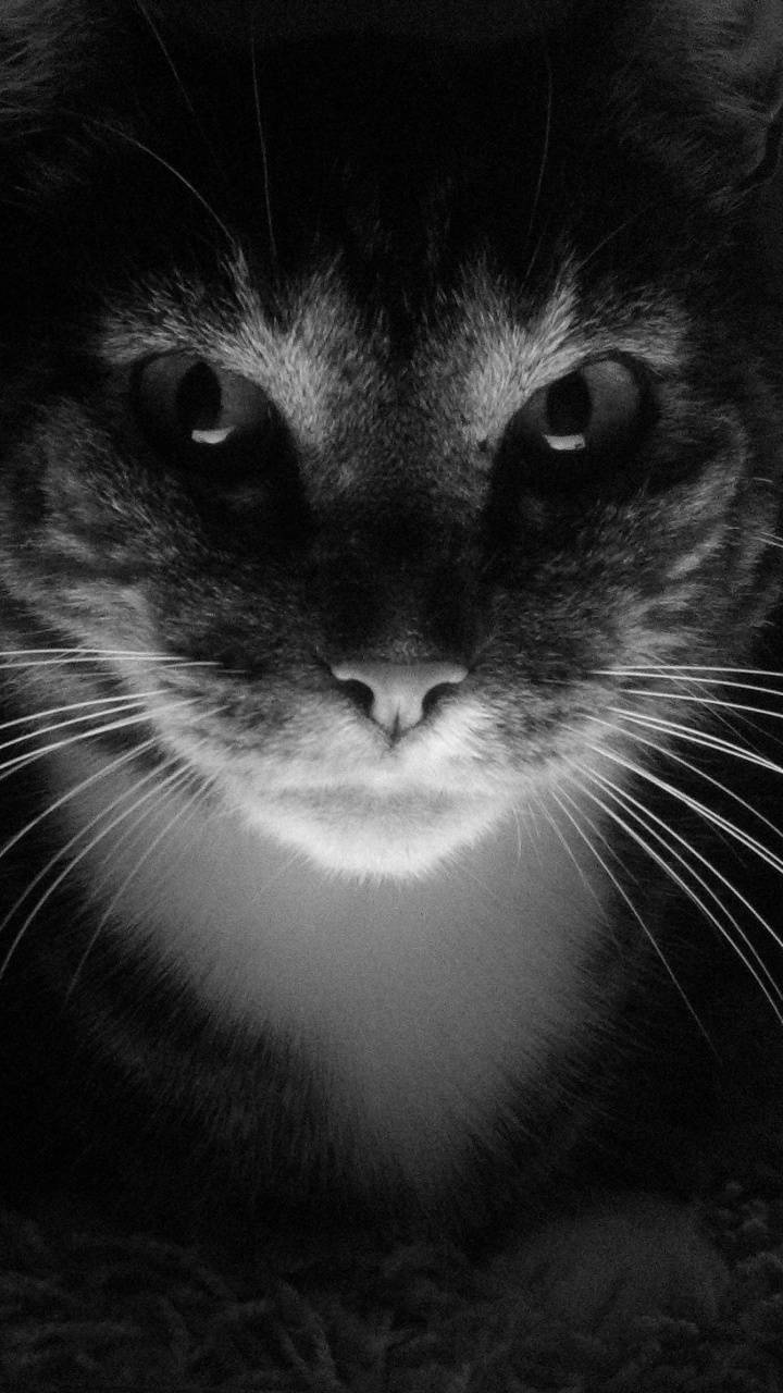 gatto lockscreen
