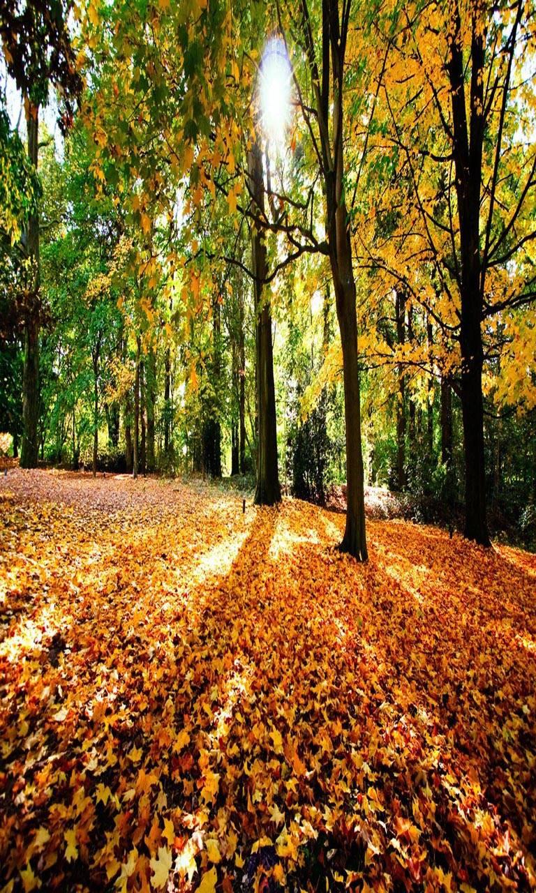Nature leaves n sun
