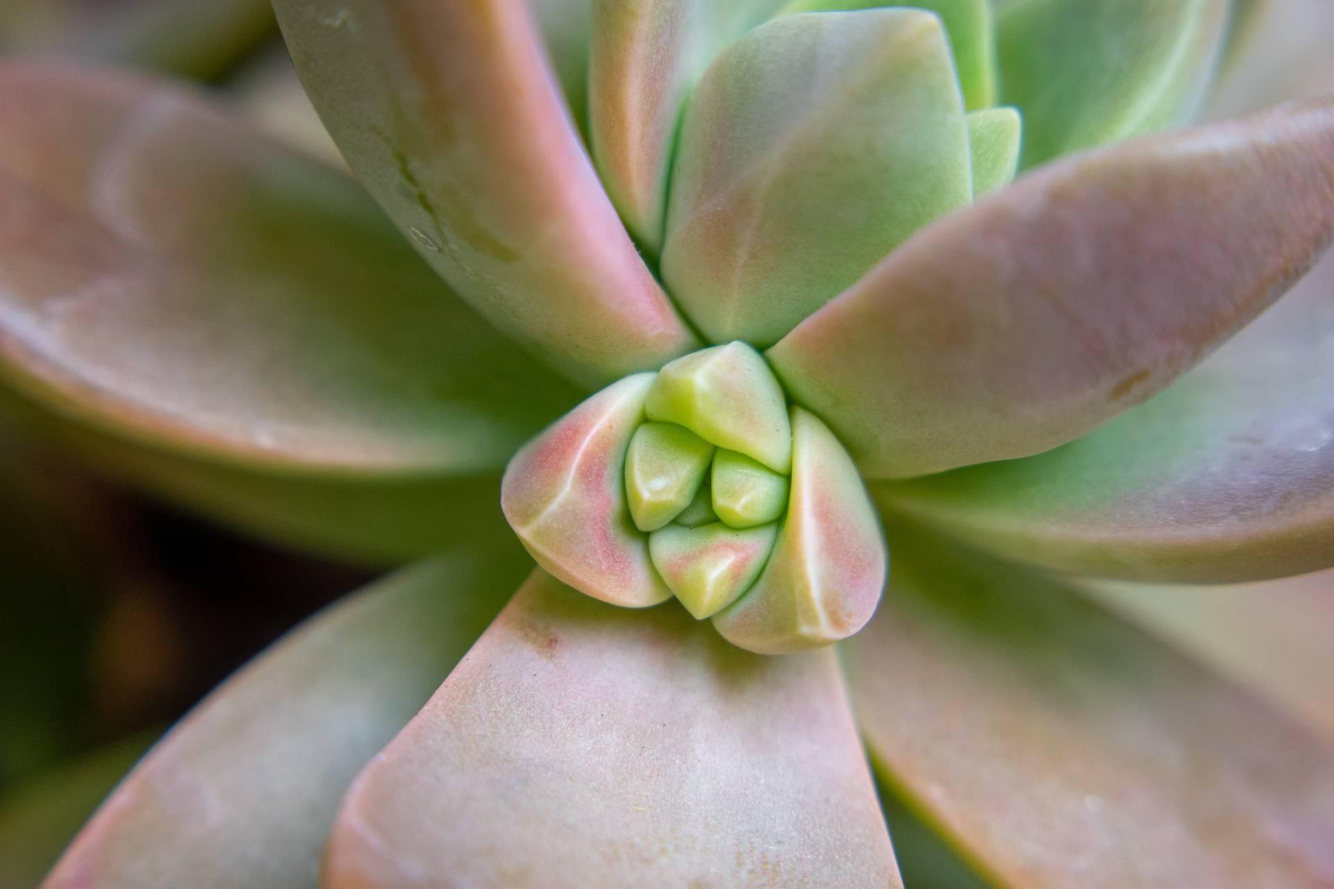 Aloe vera up close