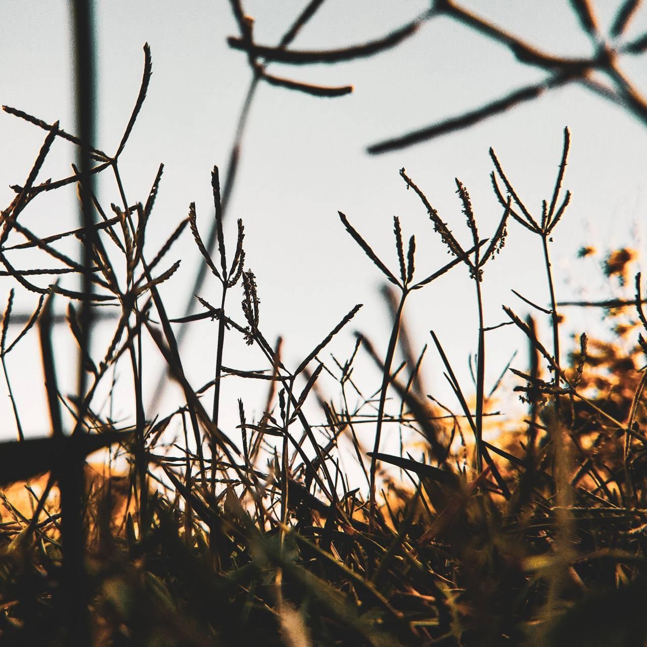 Minimal Grass