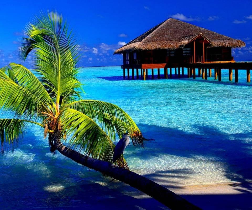 The Blue Sea Cabin
