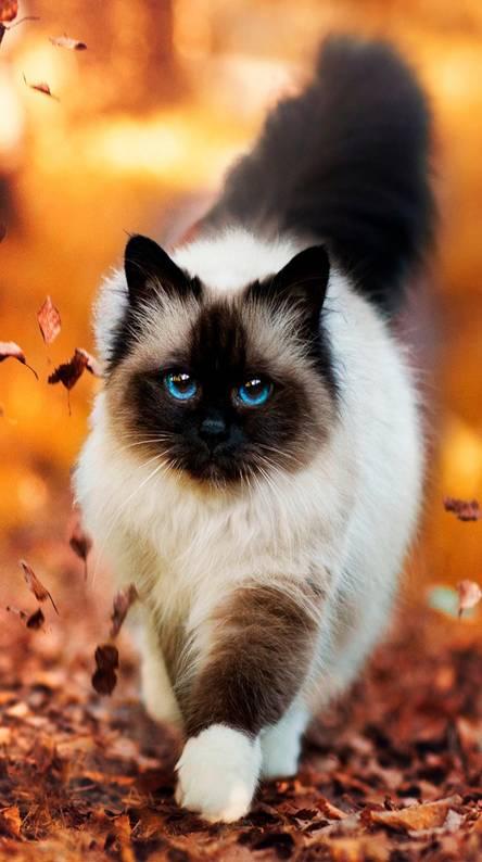 lindo gat