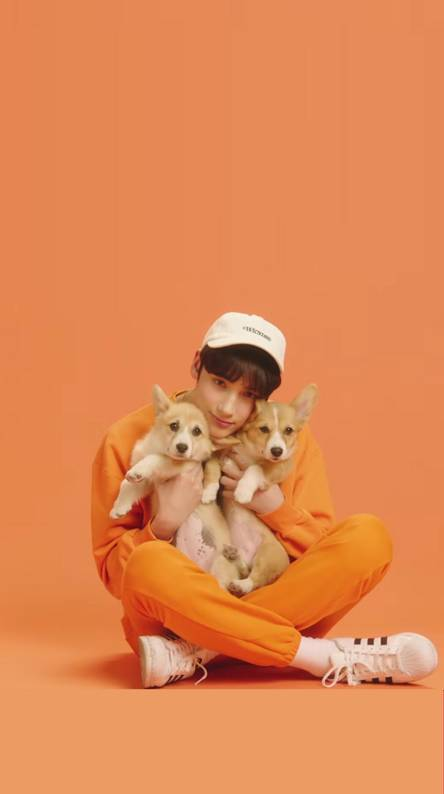 CAT AND DOG MV TXT 2