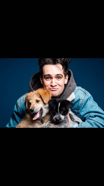 Brendon Urie puppies
