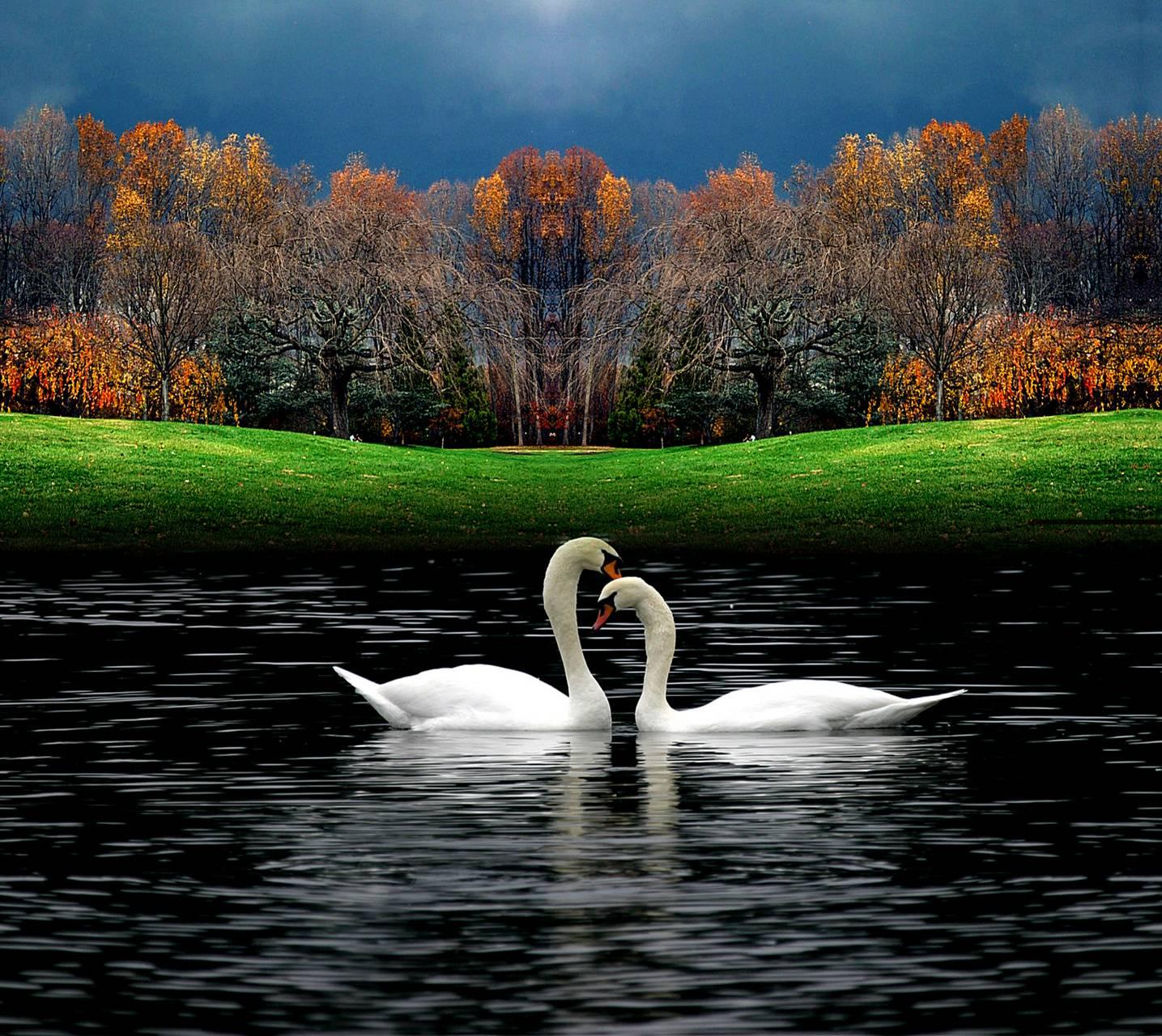 Swan Sea