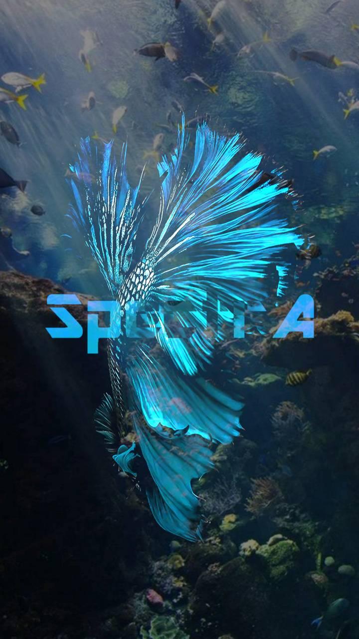 SpectrA Fish 5