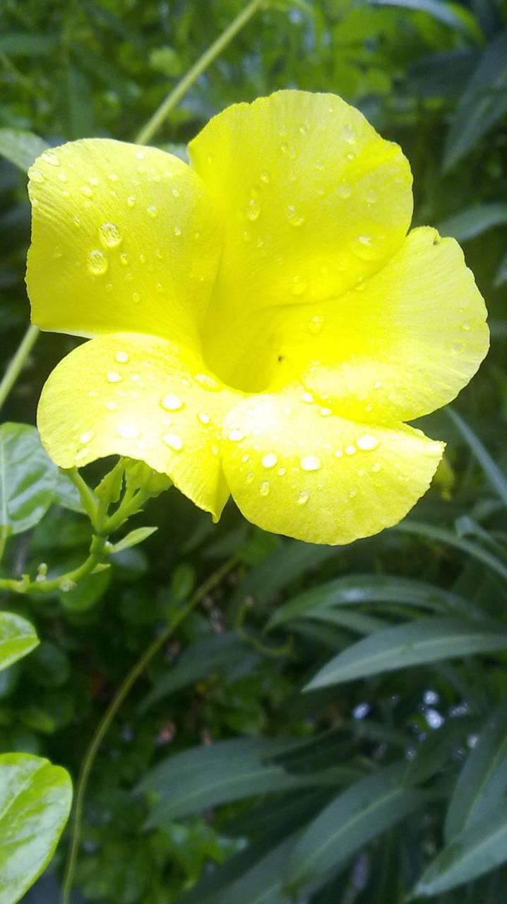 Rain Flower Wallpaper By Vasanthan28 6c Free On Zedge