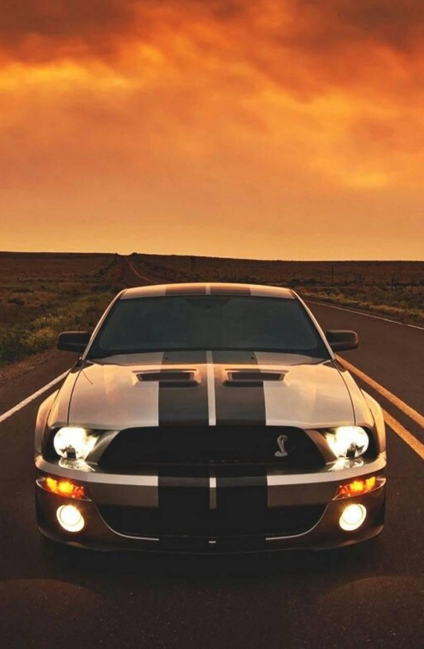 Sunlight Mustang