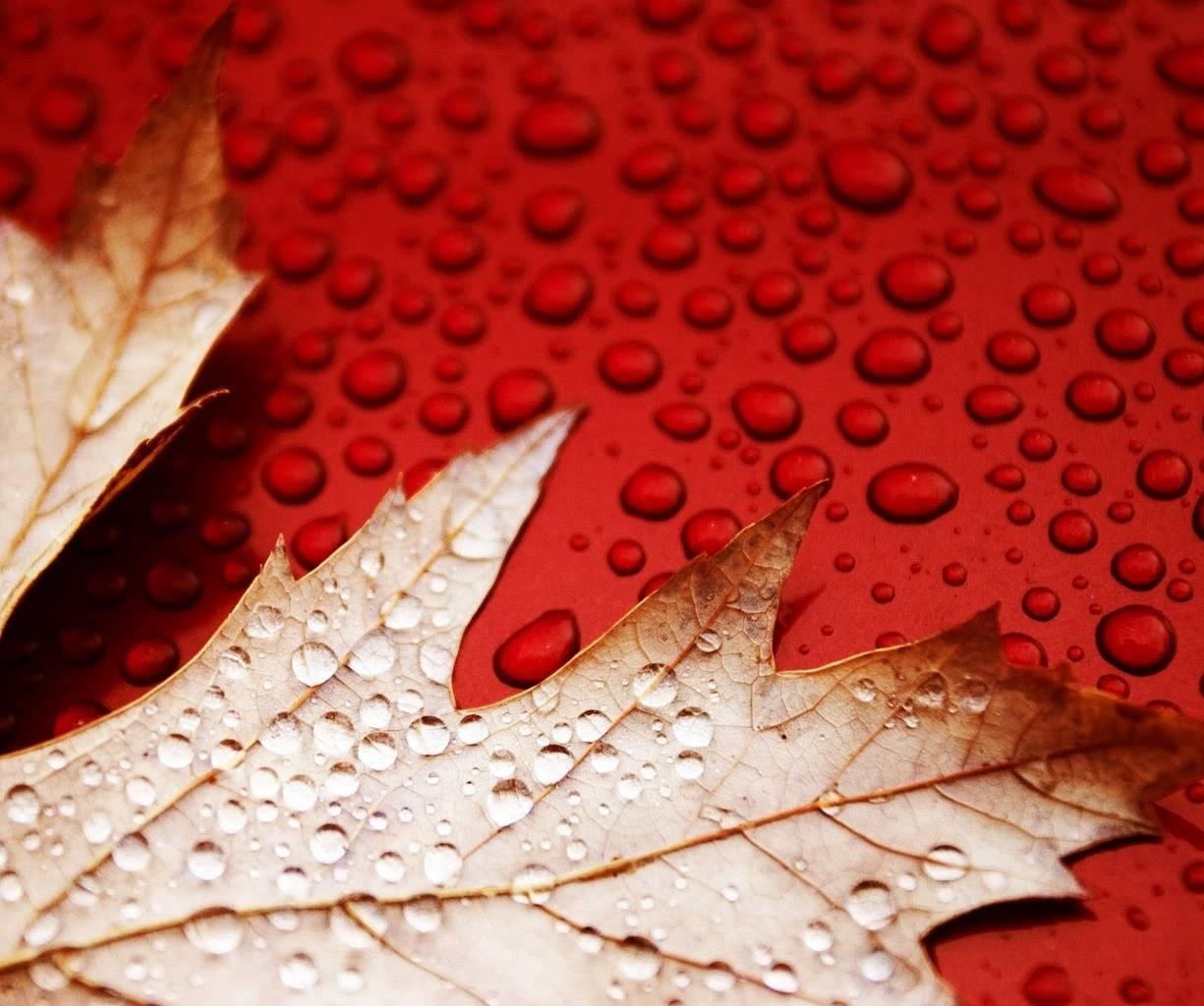 Leaf With Drop Hd