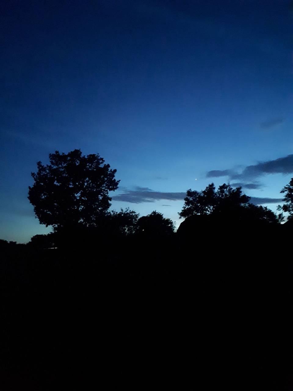 Night Sky and an Oak