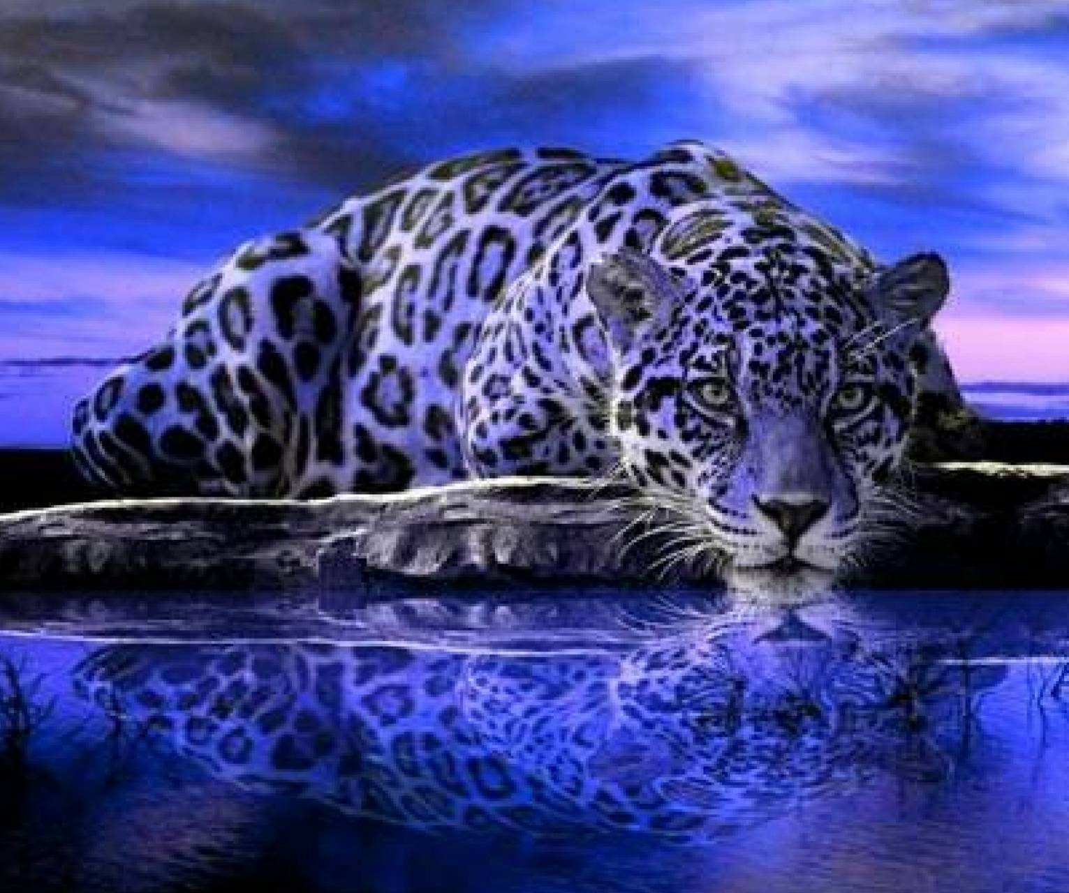 Purple Jaguar